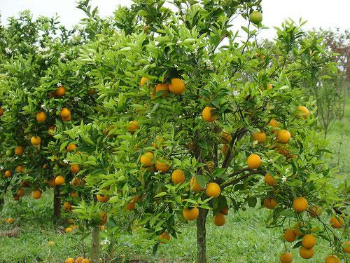 horta jardim e pomar:Jardim de Horta e Pomar – EDGARDEN