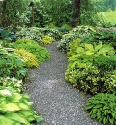 Jardim Sombra